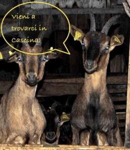 Cascina Burattana caprette