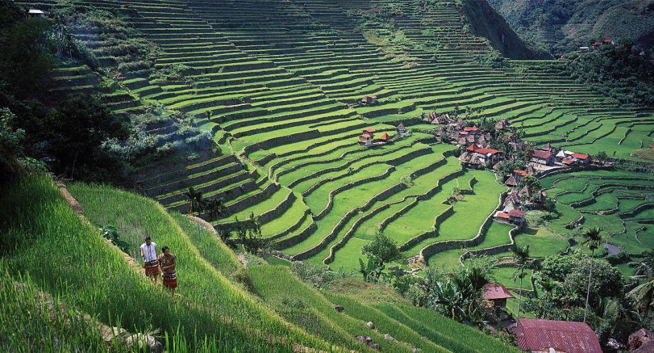 Banaue-Rice-Terraces-950x514