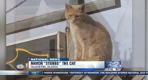 stubbs sindaco gatto