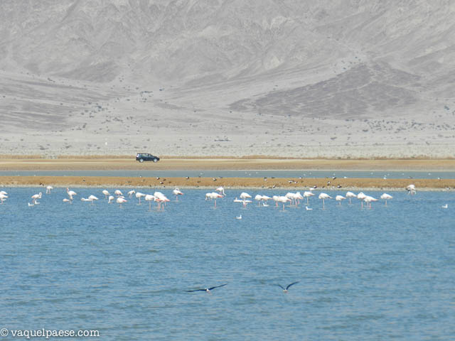 Salt Pools Eilat Flamingos