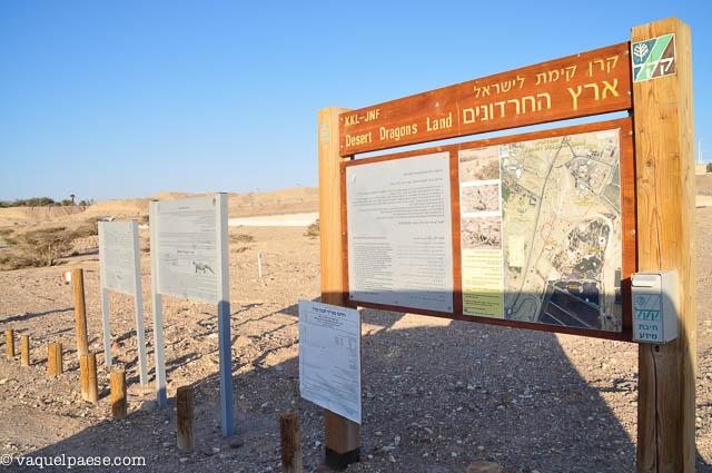 Il parco per i gechi di Eilat