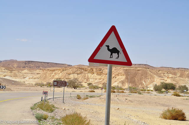 cammelli_deserto_cartello-stradale