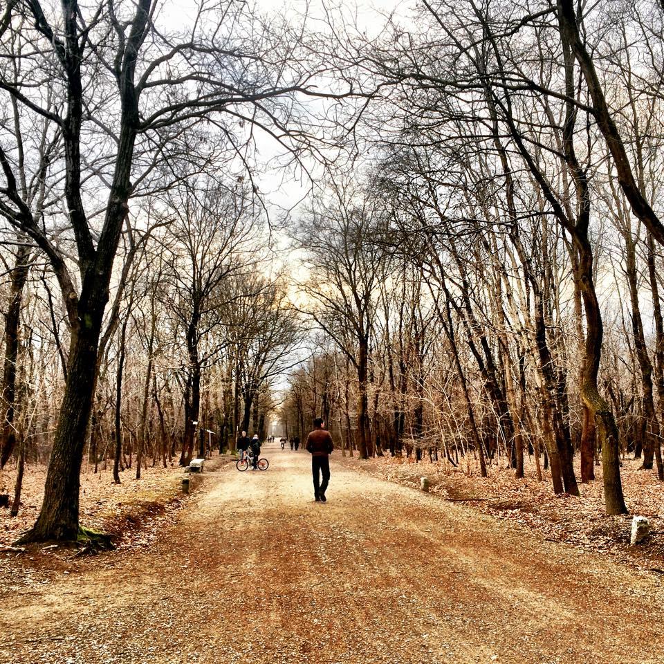 sentiero_bosco