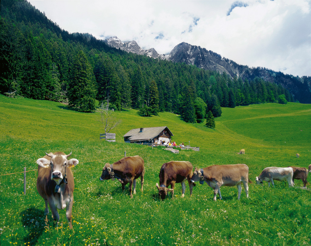 Nel canton Grigioni le Alpi di Heidi Copyright by: Switzerland Tourism By-Line: swiss-image.ch/Christof Sonderegger