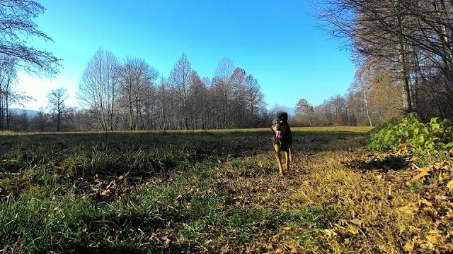 Il migliore amico di Sara, autrice di passeggiandoconilcane.it