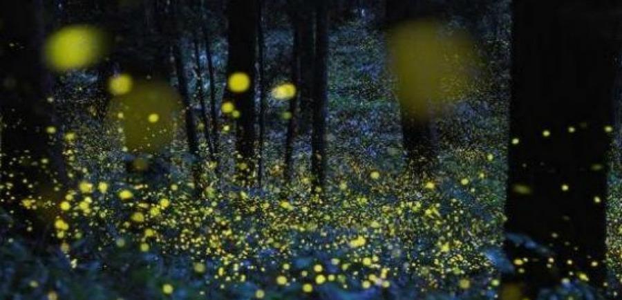 il santuario delle lucciole - Tlaxcala