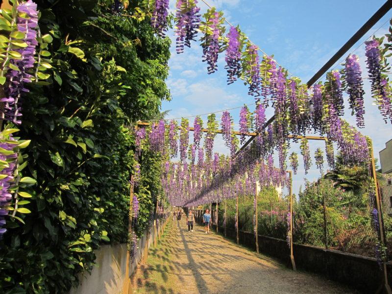Migliaia di fiori di carta decorano il paese ogni dieci anni a Casorate Sempione