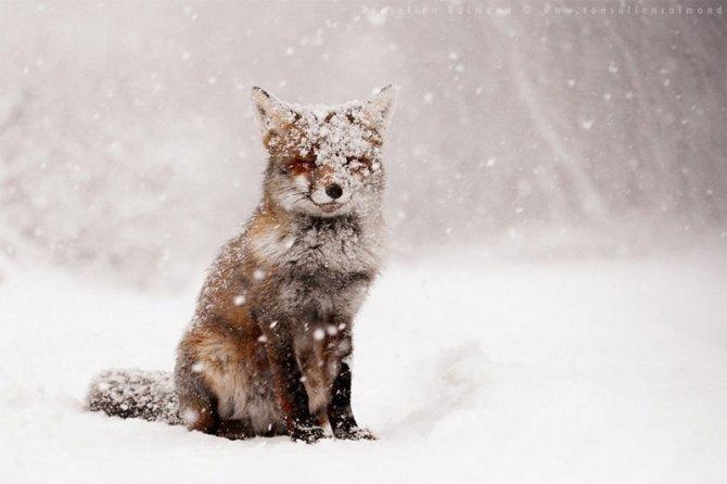 Vacanze in montagna: 10 regole per rispettare gli animali