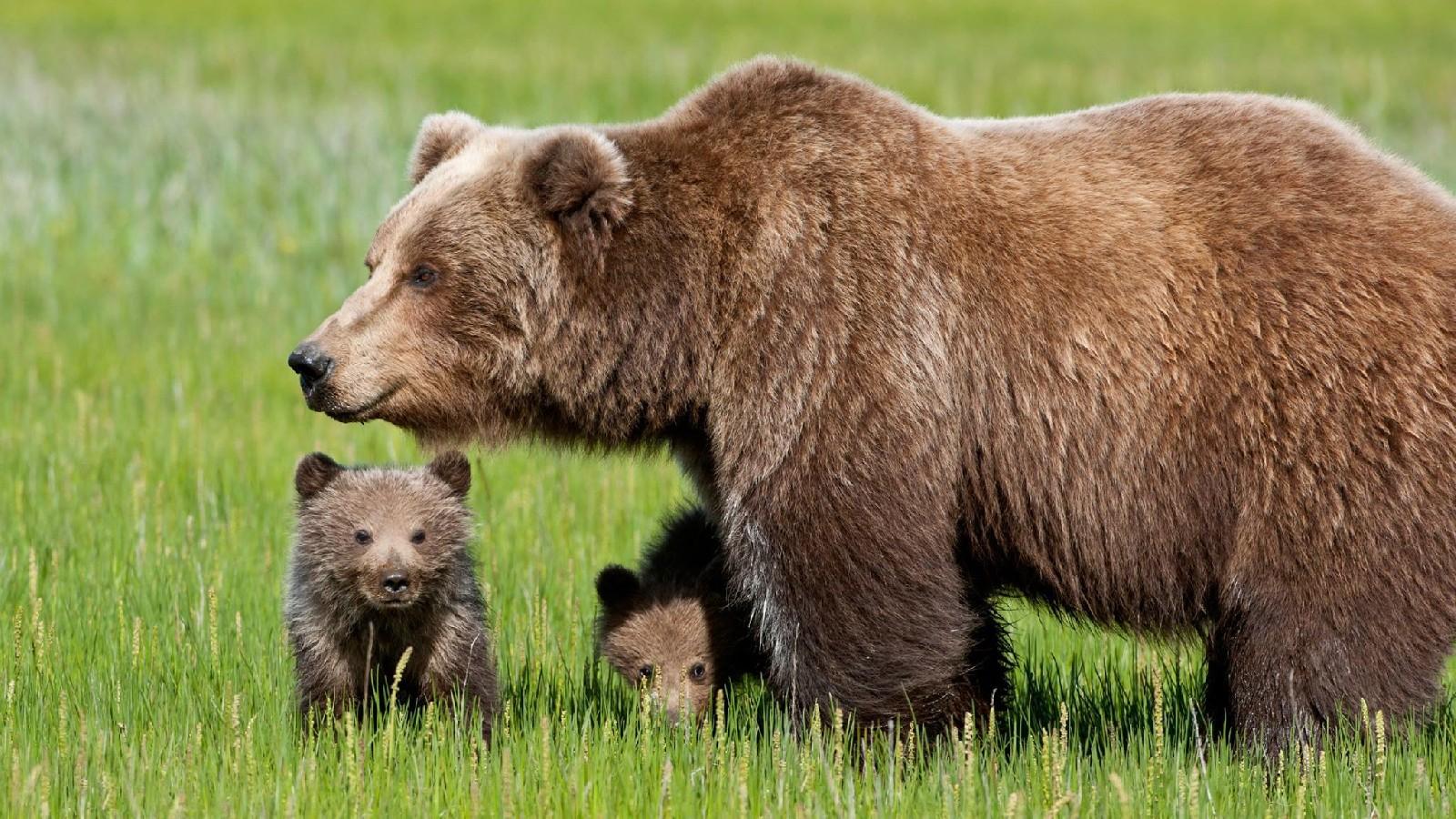 Come comportarsi se si incontra un orso durante un'escursione
