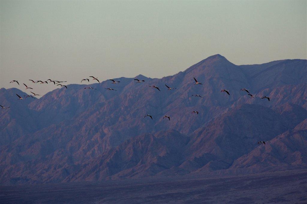 Birdwatching a Eilat (Israele): l'incredibile spettacolo della migrazione