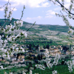 fioritura_ciliegi