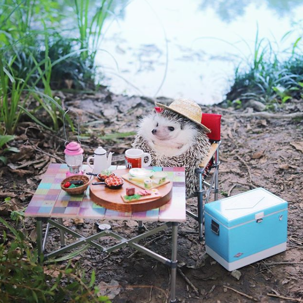 Sul profilo instagram di hedgehog_azuki