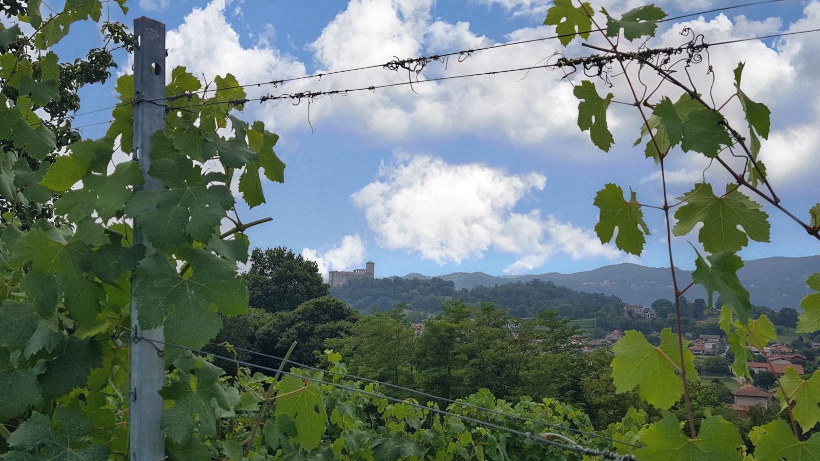 Lo strano caso del vino muffato di Cascina Piano (Angera)