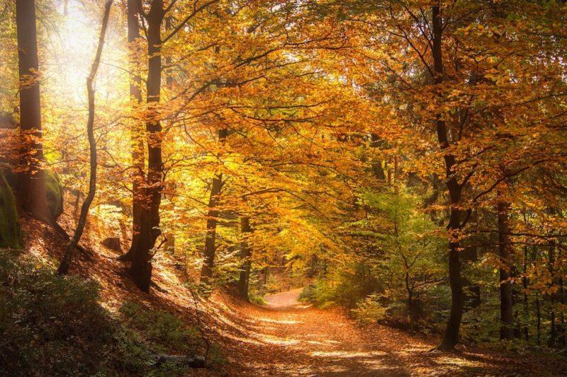 Foliage in Svizzera