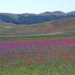 Castelluccio - fioriture (pixabay)