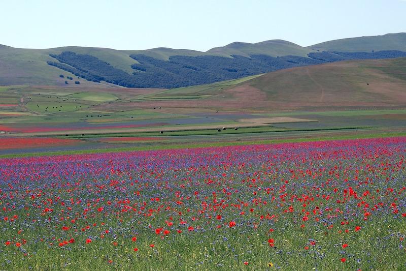 Le fioriture di primavera sui Monti Sibillini