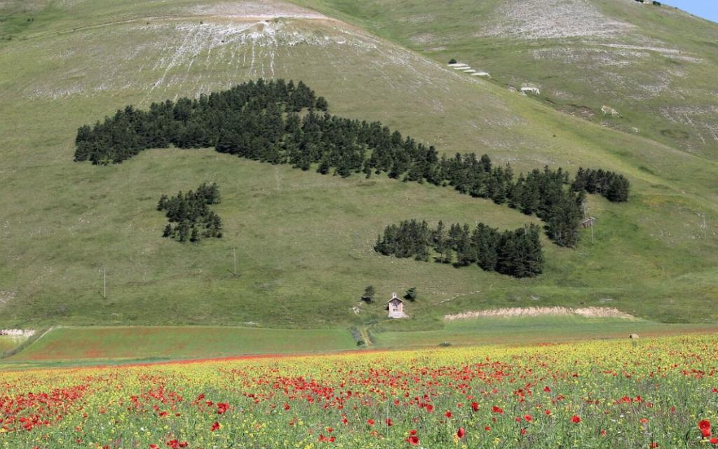 fioriture castelluccio di norcia