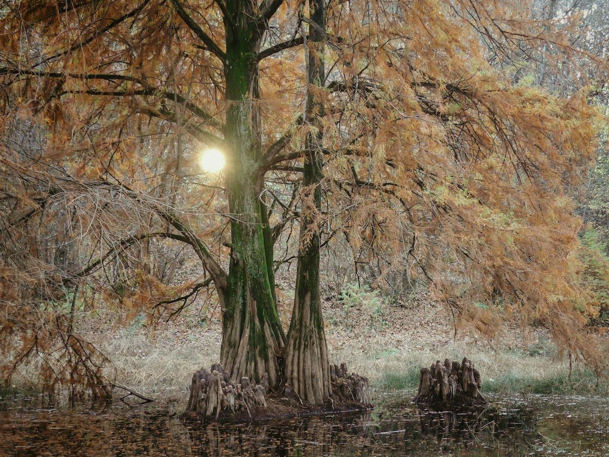 Un angolo di Louisiana sul lago Maggiore: il Laghetash di Brebbia