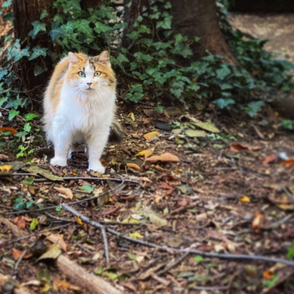 Gattoturismo: una gita a Gattaland il parco-rifugio felino