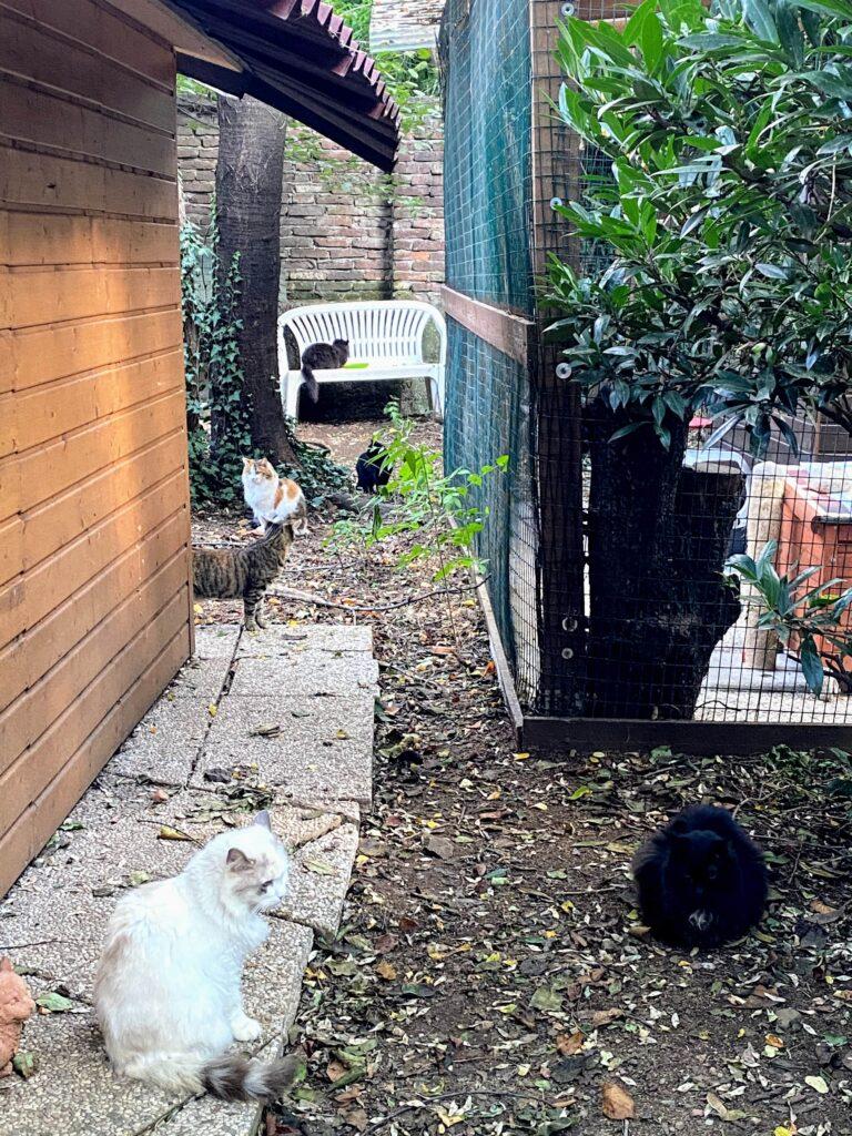 gatti di gattaland gallarate